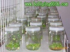 组培瓶 菌种瓶