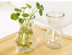 风信子玻璃花瓶